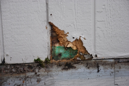Typical wood rot at the base of a home.